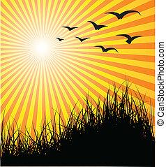 verão, -, capim, vetorial, pôr do sol, fundo, pássaros