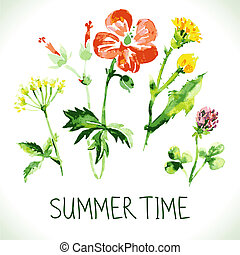 verão, card., vindima, wildflowers., saudação, aquarela,...