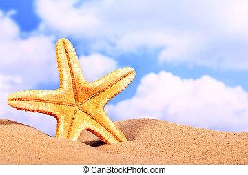 verão, cena praia, starfish, ligado, areia