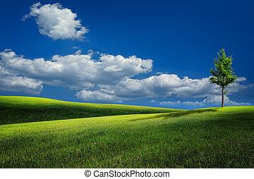 verão, colinas, sob, céus azuis, natural, paisagem