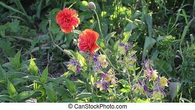 verão, cores, luminoso, vegetação, florescer