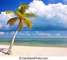 verão, em, um, paraíso tropical, em, teclas flórida, eua, com, coqueiros, céu azul, nuvens, e, cristal compensa, água, de, oceano atlântico
