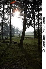 verão, fim, spooky, floresta, manhã