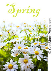 verão, flor, arte, primavera, abstratos, fundo, capim