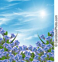 verão, flor, paisagem., sino