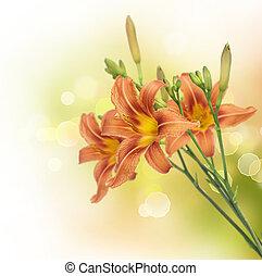 verão, flores, borda, lírio, design.