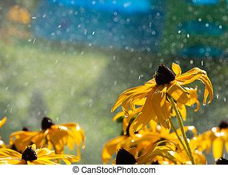 verão, flores, chuva, morno, amarela, gotas