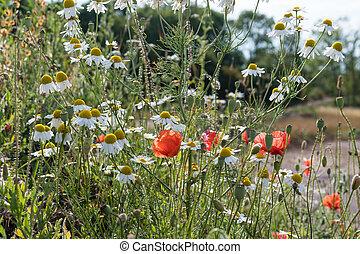 verão, flores, closeup