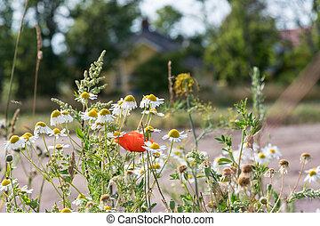verão, flores, jardim