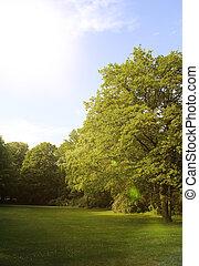 verão, floresta, árvores