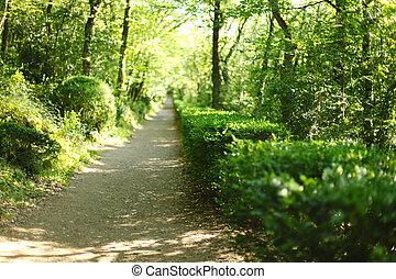 verão, floresta, luz solar