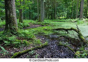 verão, floresta, paisagem, com, quebrada, árvores