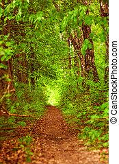 verão, floresta verde, caminho