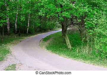 verão, floresta verde, estrada