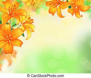 verão, fronteira natureza, sobre, obscurecido, experiência., desenho, flores, lírio