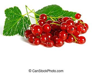 verão, fruits:, redcurrant