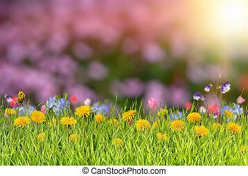 verão, fundo, com, flor