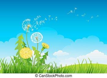 verão, fundo, dandelion