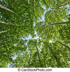 verão, fundo, de, árvores verdes