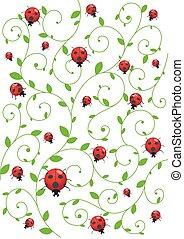 verão, fundo, ladybirds