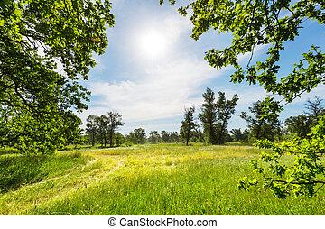 verão, gramado