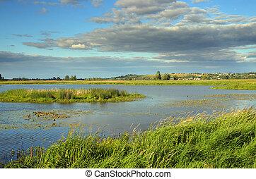 verão, lago, paisagem
