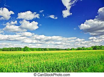verão, milho, cima, campo, fim, vista