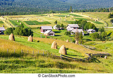 verão, montanha, rural, vista, com, palheiros, (carpathian,...
