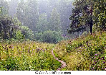 verão, nevoeiro, floresta