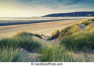 verão, noite, gramíneo, dunas, sobre, wi, praia areia, paisagem, vista