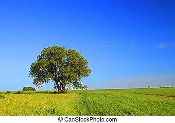 verão, paisagem árvore