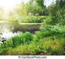 verão, paisagem, com, rio