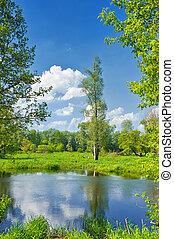 verão, paisagem, com, só, árvore