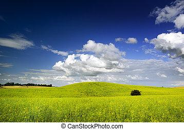 verão, paisagem.