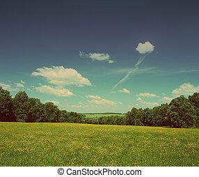 verão, paisagem, -, vindima, estilo retro
