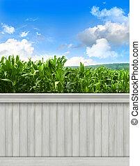 verão, parede, background/backdrop