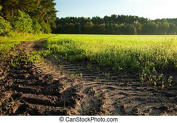 verão, pequeno, árvore, céu, grama verde, chão