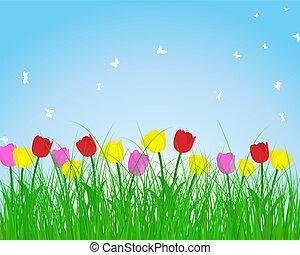 verão, prado, fundo, tulips