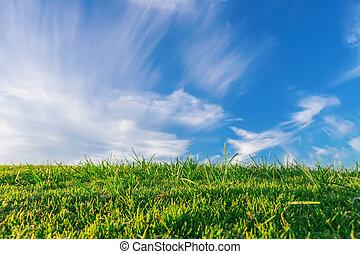 verão, prado verde, capim, contra, um, azul, sky., summer.