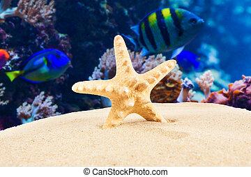 verão, praia., arenoso, starfish, tempo