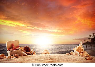 verão, praia, com, strafish, e, conchas