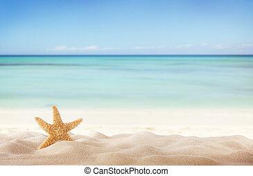 verão, praia, starfish