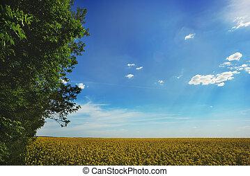 verão, quadro, de, um, campo amarelo