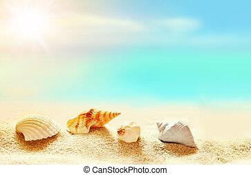 verão, seashells, praia., tempo