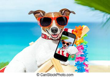 verão, selfie, cão