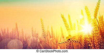 verão, trigo, dourado, campo, sobre, campo, landscape;, amanhecer
