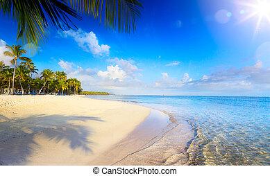 verão, tropicais, beach;, calmo, férias, fundo