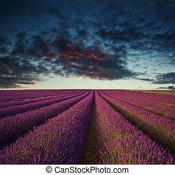 verão, vibrante, sobre, cor campo alfazema, pôr do sol, paisagem