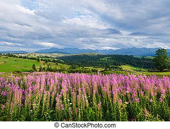 verão, vista montanha, país