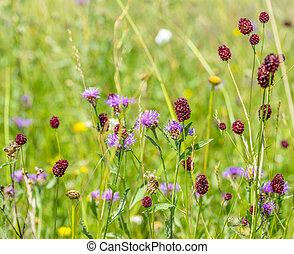 verão, wildflowers, tempo